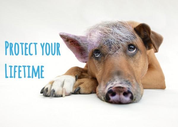 The Innerer Schweinehund – Protect your Lifetime